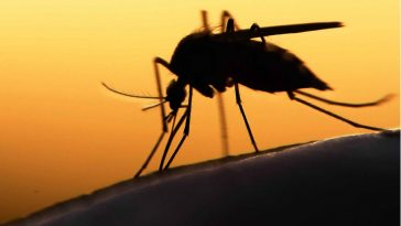 Florida to Release 750 Million Mosquitos to Combat…. Mosquitos