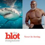 Terrified Mike Tyson Puts Shark to Sleep, Tickling Its Nose