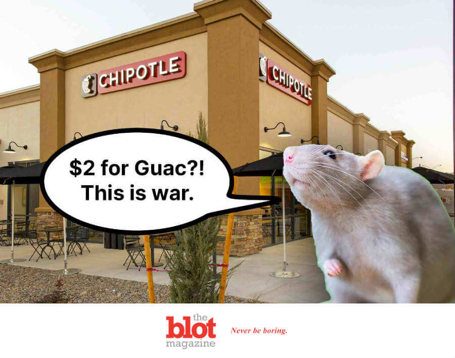 Attacking, Biting Rats Close New York City Chipotle
