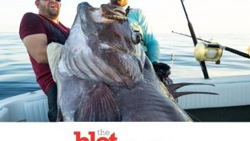 Insanely Large Catch! Fishermen Haul In 300 Pound Warsaw Grouper