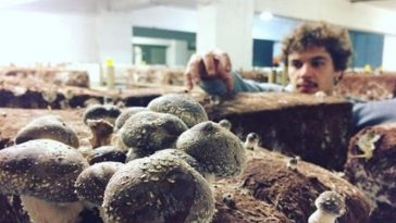 Parisian Parking Lots Turning Into Underground Mushroom Farms