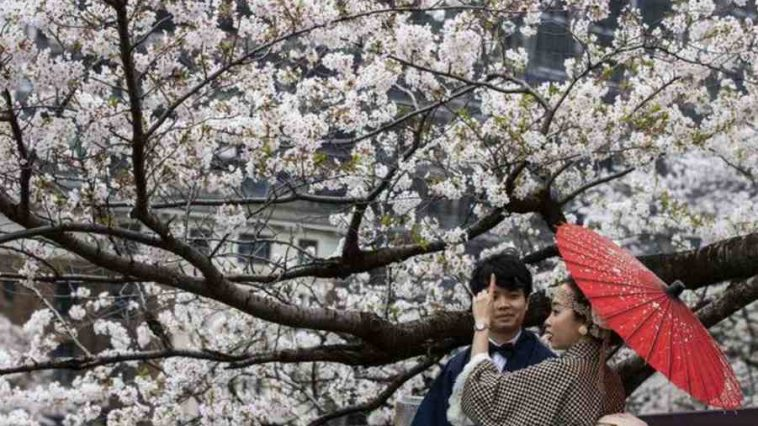Japan Sees Earliest Cherry Blossoms in Over 1,200 Years, Global Warming