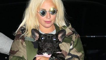 "Woman Who ""Found"" Lady Gaga's Dogs Now Under Arrest"