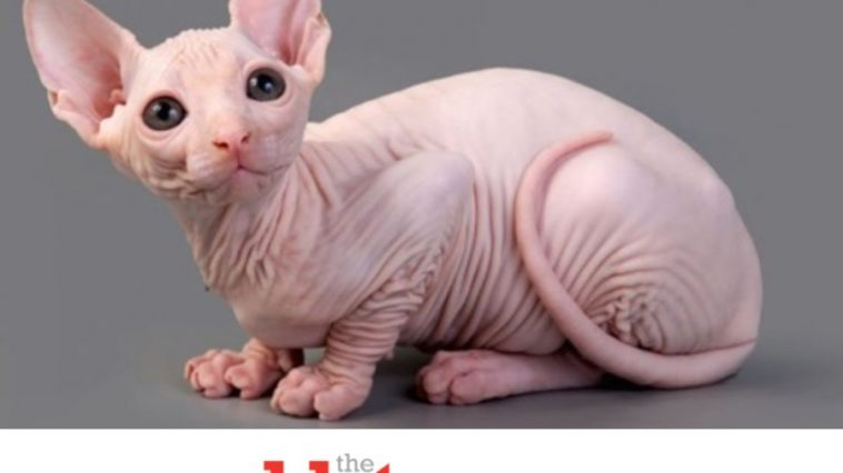 Some Freak in Virginia Shaving Other People's Pet Cats