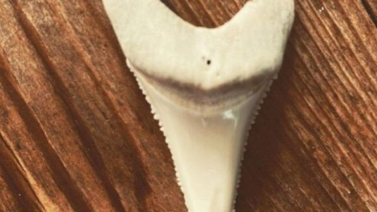 Surfer Who Lost Leg to Great White Finally Allowed Shar Tooth Souvenir