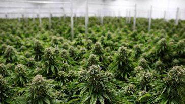 Flint, Michigan Sold Police Academy to Become Marijuana Grower